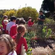 Huerto Ecológico del Colegio Alborán de Marbella